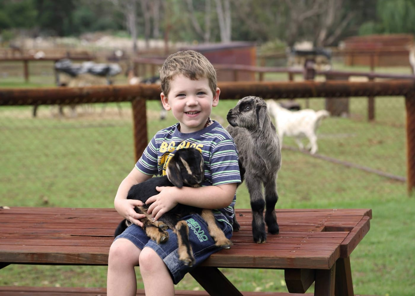 perth with kids cuddly animal farm