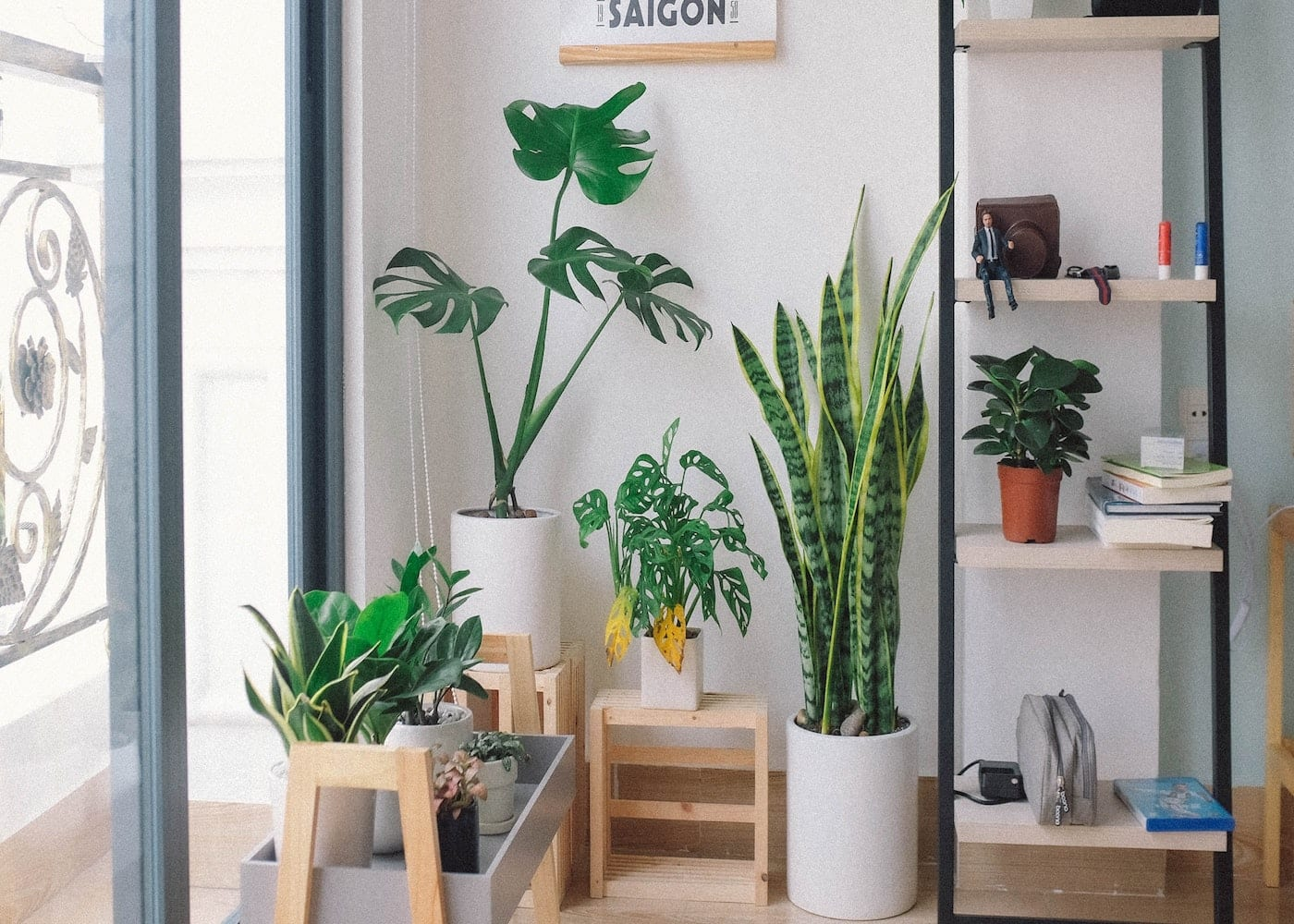 how to be a good plant parent yellow leaves