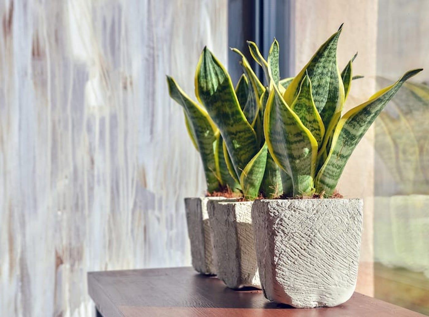 how to be a good plant parent snake plant